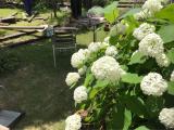 「週末リラックス♩  お庭仕事♩  リソウ  リペアジェル リペアウォーター」の画像(4枚目)