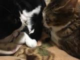 かわいい愛猫のT- shirtをデコプリで♡の画像(2枚目)