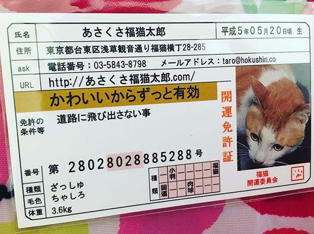 口コミ投稿:.豆お守り.あさくさ福猫太郎は浅香光代さんが傷だらけの野良猫を助けたことで飼い始…