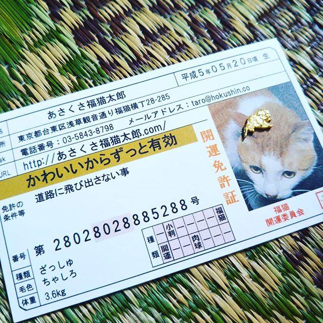 口コミ投稿:3回目!あさくさ福猫太郎お守りゲット!良いことがありますように!あさくさ福猫太郎…