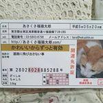 かわいい開運雑貨「あさくさ福猫太郎」の紹介です。あさくさ福猫太郎とは?浅香光代さん(浅草の女剣劇役者)が、野良猫を助けたことにより飼い始めてからというもの幸福が次から次へと舞い込み多くの人を幸せに…のInstagram画像