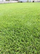 芝刈り18回目の画像(2枚目)