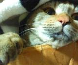 「モニター募集中に応募中。【マイナスイオン水で簡単お手入れ!猫の目ヤニお手入れ】」の画像(2枚目)