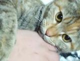 「モニター募集中に応募中。【マイナスイオン水で簡単お手入れ!猫の目ヤニお手入れ】」の画像(5枚目)