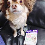 免疫力と抵抗力をサポートしてくれる犬用サプリ🐶病気にならず、元気でいて欲しいな♡#DHC #DHCPET #初乳ラクトフェリン #愛犬 #株式会社ディーエイチシーファンサイト参加中 #mo…のInstagram画像