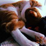 ♡Friday🐈🌈、冷房のおかげですやすや毎日寝てる猫です🐈💕ご機嫌です。、写真4枚目SALAMORE(サラモア)は小さなお子さん、家族の中に動物がいる方も安心して使え…のInstagram画像