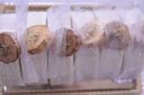「マクロビオティックBIOKURAビオクラの美味しいケーキ♪焼きバナナとリュバーブのロール」の画像(2枚目)