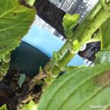 saxia植物長持ちモニター 中♥の画像(2枚目)