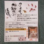 昔から豆お守りをお財布に入れておくのが好きで、今年から集めているのが「あさくさ福猫太郎」の豆お守り🐱モニプラのイベントでゲットしています♪お守りも、免許証の写真も数種類あり✨台…のInstagram画像