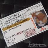 「開運祈願☆伝説の福猫 #あさくさ福猫太郎#豆お守り」の画像(3枚目)