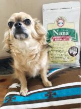 日本で暮らすわんこの為のプレミアムフード Nana ♡ベルごはん中♡の画像(2枚目)