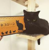 猫の健康に。ネコジーン☆の画像(1枚目)
