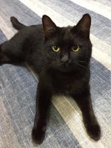 猫の健康に。ネコジーン☆の画像(7枚目)