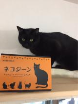 猫の健康に。ネコジーン☆の画像(2枚目)