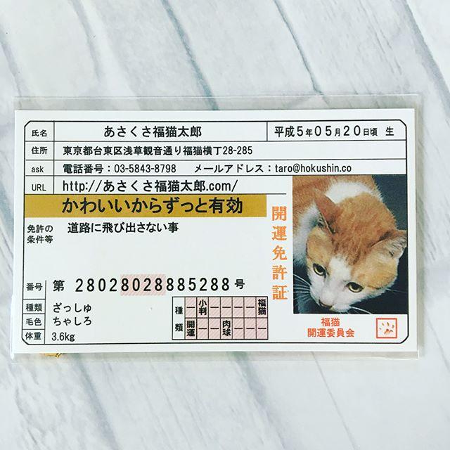 口コミ投稿:マスキングテープではなかったけれど、福猫の豆お守りを頂きました🤗福猫太郎パワーで…