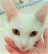 「マイナスイオン水で猫のお手入れにも安心♪【ピュアイオンミスト】」の画像(1枚目)