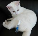 「マイナスイオン水で猫のお手入れにも安心♪【ピュアイオンミスト】」の画像(2枚目)