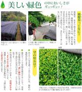 静岡県産のこだわりの上級深むし茶3煎の画像(4枚目)