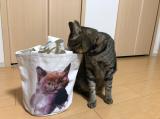 ヤバかわ❤️イーザッカマニアの猫ちゃんトート❤️の画像(6枚目)