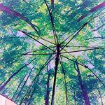⛱...relax umbrella🌂...一見、普通のシンプルな黒い傘に見えるけど、内側は全く別の世界が広がっている🌈😮...傘を開くと綺麗な森の…のInstagram画像