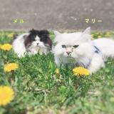「☆ピュアイオンミスト☆」の画像(3枚目)