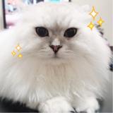 「☆ピュアイオンミスト☆」の画像(7枚目)