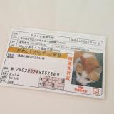 「開運祈願*あさくさ福猫太郎 開運豆お守り【お守り】 」の画像(3枚目)