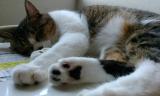 「愛猫ちゃんのお手入れに♡」の画像(7枚目)