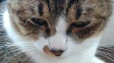 「愛猫ちゃんのお手入れに♡」の画像(3枚目)