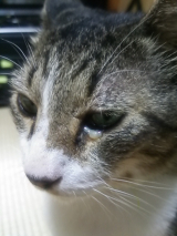 「猫と一緒に使えるミスト?」の画像(3枚目)