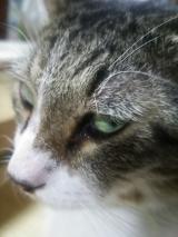 「猫と一緒に使えるミスト?」の画像(4枚目)