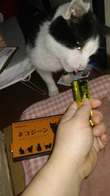 ネコの画像(1枚目)