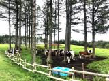 軽井沢旅行*アラサーOLの夏の思い出の画像(6枚目)