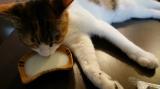 【モニター】ペット用免疫ミルク、ペットアイジージーの画像(6枚目)