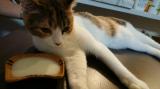 【モニター】ペット用免疫ミルク、ペットアイジージーの画像(7枚目)