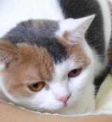 「動物夏バテ気味のペットにも、動物病院専用ペット用キングアガリクス製品【NKUP+α】10粒」の画像(5枚目)