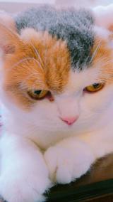 「動物夏バテ気味のペットにも、動物病院専用ペット用キングアガリクス製品【NKUP+α】10粒」の画像(1枚目)