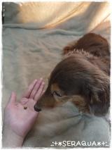 「☆キングアガリクスの動物病院専用商品【NKUP+α】☆」の画像(5枚目)