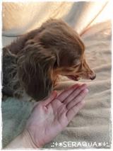 「☆キングアガリクスの動物病院専用商品【NKUP+α】☆」の画像(8枚目)
