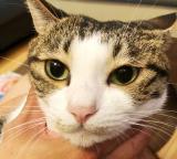 「愛猫の目ヤニ対策 ピュアイオンミスト」の画像(4枚目)