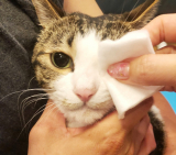 「愛猫の目ヤニ対策 ピュアイオンミスト」の画像(3枚目)