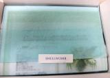 「<monitor>シェルゥーム 新アルファピ二28 コーラルクリア パウダーウォッシュ」の画像(1枚目)