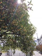 秋ですね(´ω`*)の画像(1枚目)