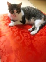 「愛猫の気になる癖」の画像(2枚目)