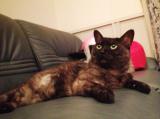 「愛猫の気になる癖」の画像(1枚目)