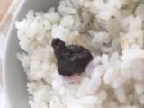 モニプラ報告:紅玉ねりシソ 100g 【海の精】の画像(4枚目)