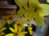 花壇の掃除・ヤーコンのお花の画像(6枚目)