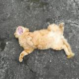 「趣味は猫の避妊・去勢手術です(笑)」の画像(1枚目)