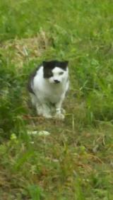 「趣味は猫の避妊・去勢手術です(笑)」の画像(2枚目)