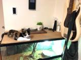 猫のにおいに立ち向かうことにしたの画像(9枚目)